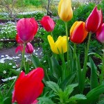 春の花満開、花の魅力