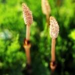 旧暦と季節のずれ|立春が過ぎたのに大寒波なぜ?
