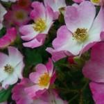 心も体も癒される~花の魅力と効果・最近「ボタニカル」が熱い!